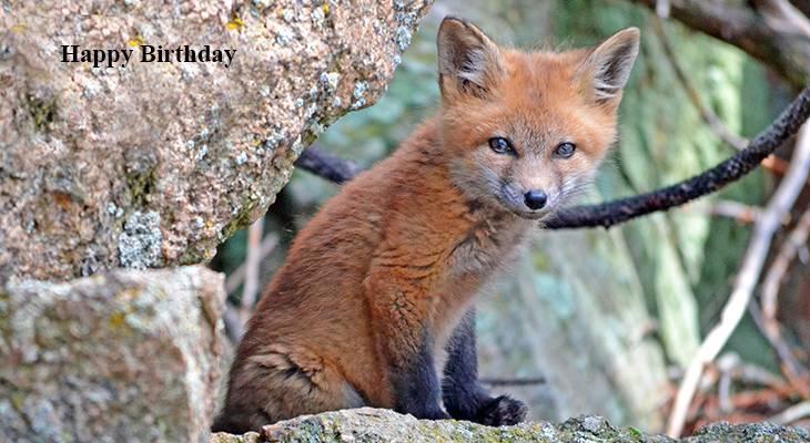 happy birthday wishes, birthday cards, birthday card pictures, famous birthdays, red fox cub, wild animals, cute baby animals