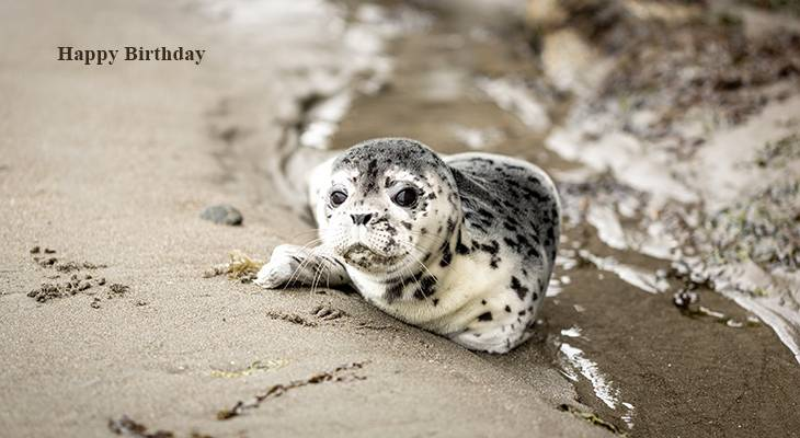 happy birthday wishes, birthday cards, birthday card pictures, famous birthdays, seal, wild animals, cape blanco usa