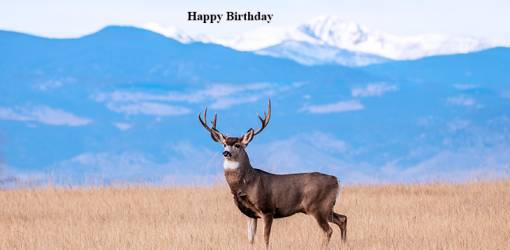 happy birthday wishes, birthday cards, birthday card pictures, famous birthdays, buck deer, wild animals, colorado usa