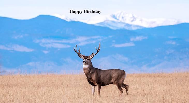 happy birthday wishes, birthday cards, birthday card pictures, famous birthdays, buck deer, wild animals, colorado usa