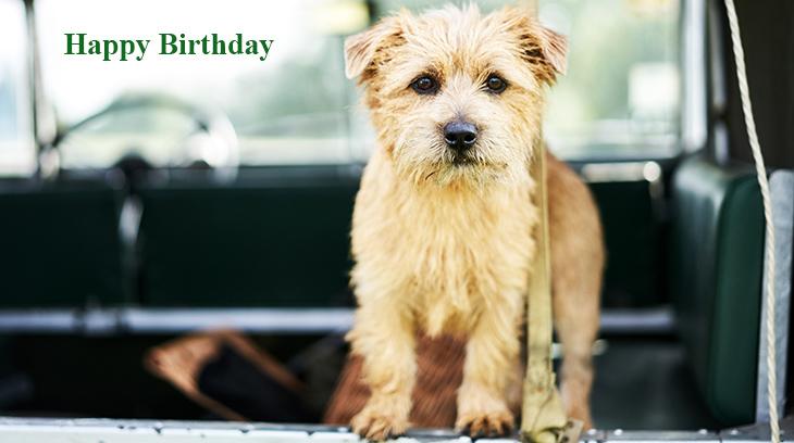 happy birthday wishes, birthday cards, birthday card pictures, famous birthdays, brown dog,  terrier puppy, animals, mutt