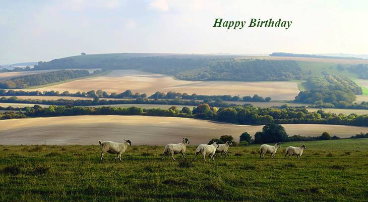 happy birthday wishes, birthday cards, birthday card pictures, famous birthdays, sheep, beacon hill burghclere, nature scenery