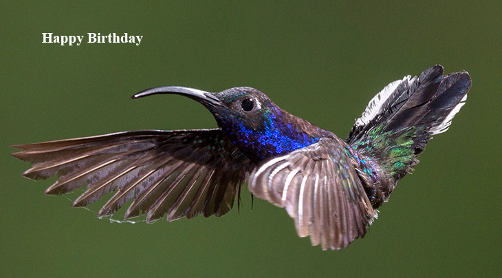 happy birthday wishes, birthday cards, birthday card pictures, famous birthdays, hummingbirds, wild birds