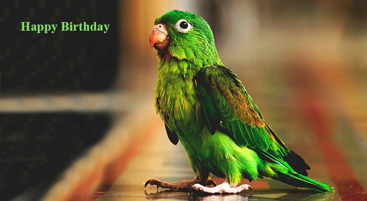 happy birthday wishes, birthday cards, birthday card pictures, famous birthdays, green bird, green budgie, parrakeet, parrot,