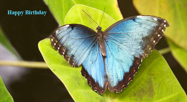 happy birthday wishes, birthday cards, birthday card pictures, famous birthdays, blue butterfly, nature scenery, butterflies