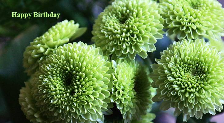 happy birthday wishes, birthday cards, birthday card pictures, famous birthdays, green flowers, dahlias, chrysanthemums