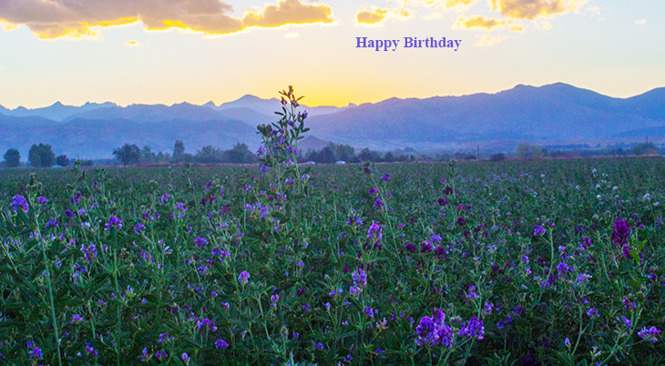 happy birthday wishes, birthday cards, birthday card pictures, famous birthdays, purple flowers, wildflowers, nature scenery