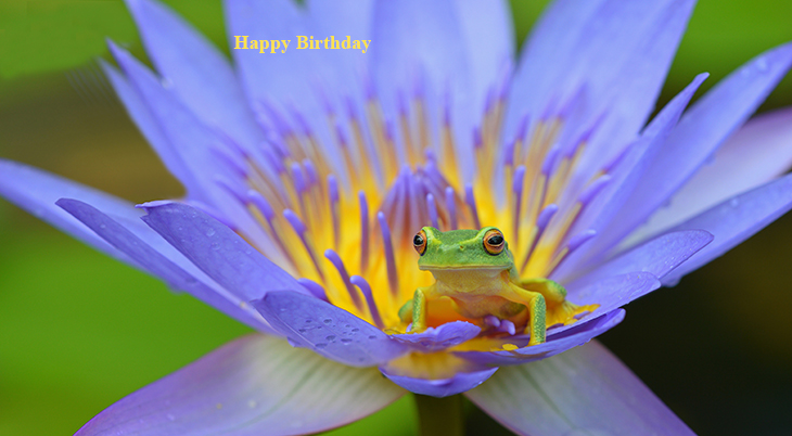 happy birthday wishes, birthday cards, birthday card pictures, famous birthdays, purple water lily, green tree frog, nature scenery