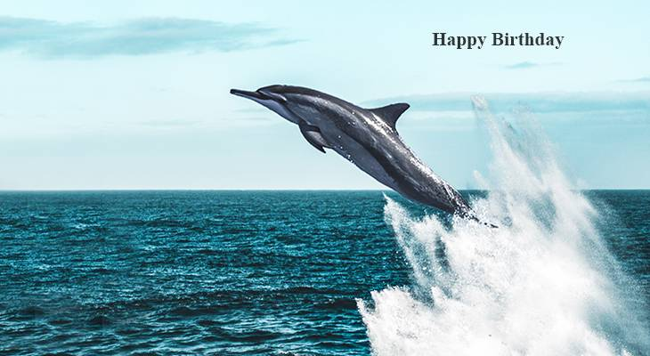 happy birthday wishes, birthday cards, birthday card pictures, famous birthdays, dolphin, wild animals, porpoise