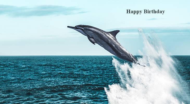 happy birthday wishes, birthday cards, birthday card pictures, famous birthdays, dolphin, wild animals, porpoise