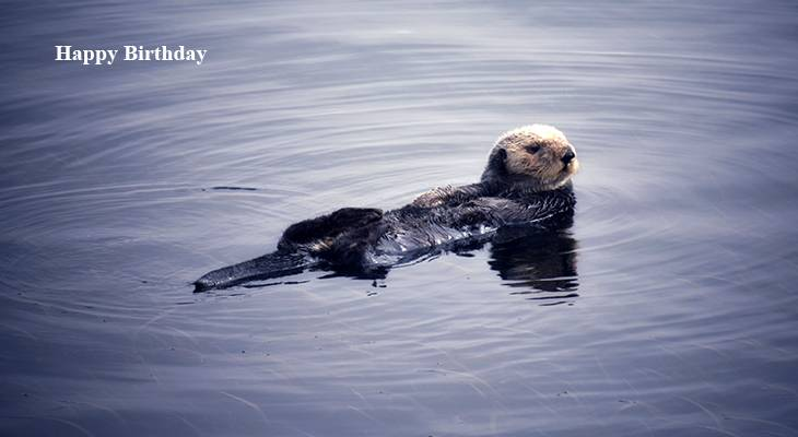 happy birthday wishes, birthday cards, birthday card pictures, famous birthdays, otter, wild animals