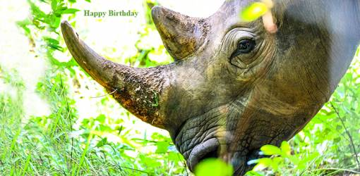 happy birthday wishes, birthday cards, birthday card pictures, famous birthdays, rhinoceros, wild animals, african animals