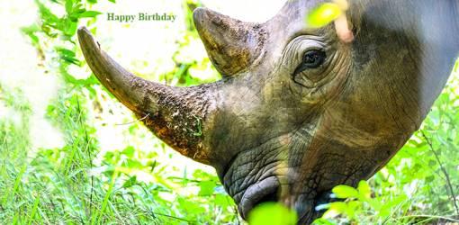 happy birthday wishes, birthday cards, birthday card pictures, famous birthdays, rhinoceros, wild animals, african animals