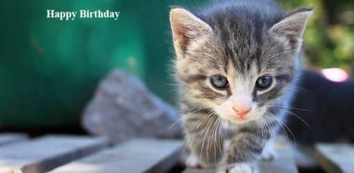 happy birthday wishes, birthday cards, birthday card pictures, famous birthdays, gray kitten, grey cat, baby animals