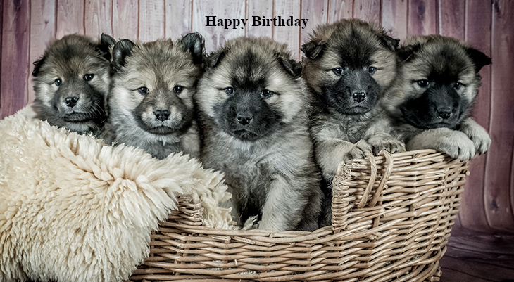 happy birthday wishes, birthday cards, birthday card pictures, famous birthdays, eurasier puppies, dogs, baby animals