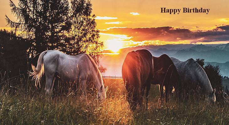 happy birthday wishes, birthday cards, birthday card pictures, famous birthdays, horses, animals, sunset, nature scenery, sunrise