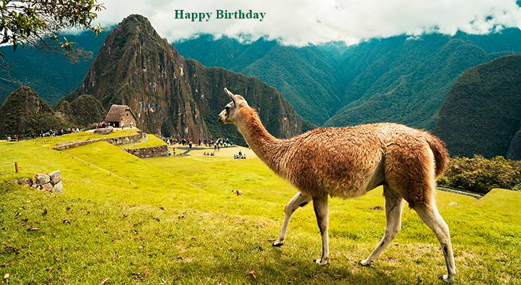 happy birthday wishes, birthday cards, birthday card pictures, famous birthdays, llama, machu picchu, peru animals