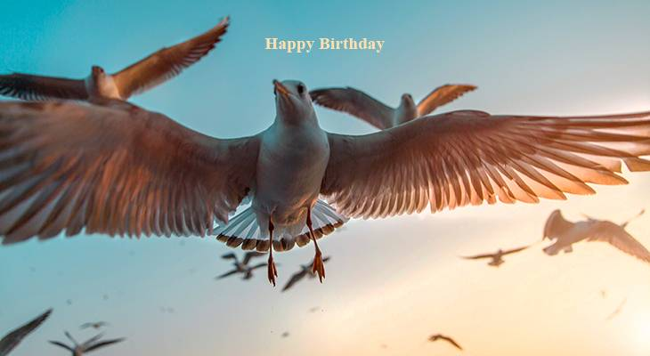 happy birthday wishes, birthday cards, birthday card pictures, famous birthdays, seagulls, wild birds,