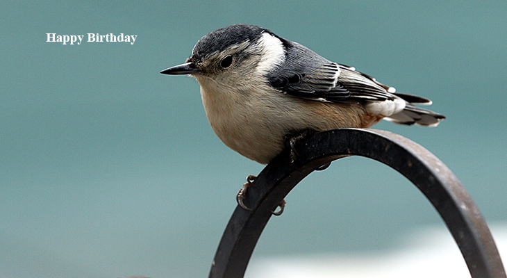happy birthday wishes, birthday cards, birthday card pictures, famous birthdays, nuthatch, wild birds