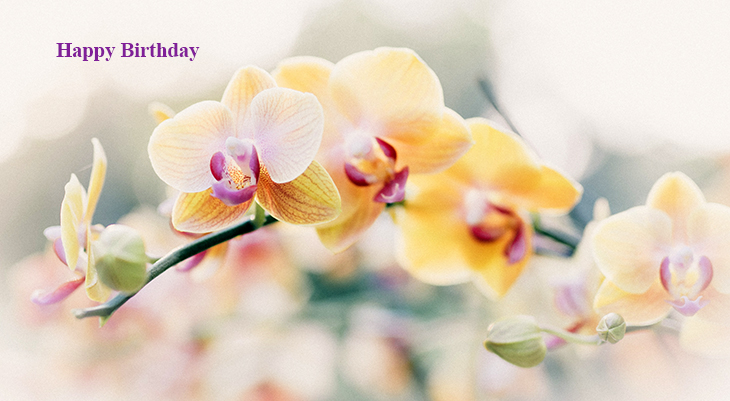 happy birthday wishes, birthday cards, birthday card pictures, famous birthdays, yellow flowers, orchids, pink flowers