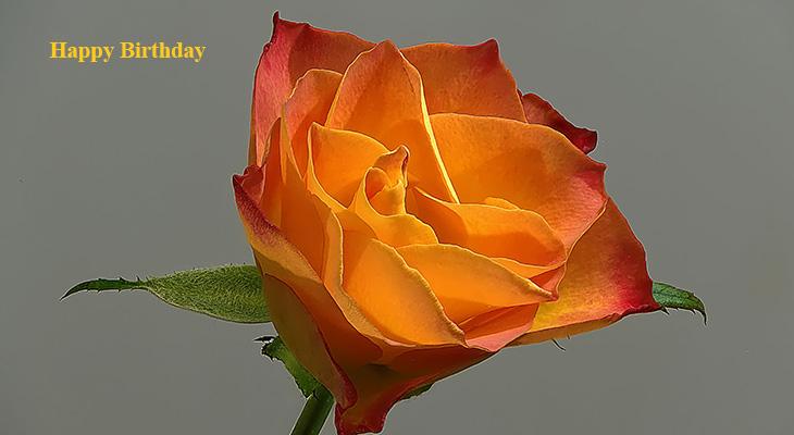 happy birthday wishes, birthday cards, birthday card pictures, famous birthdays, yellow rose, orange flower, single rose