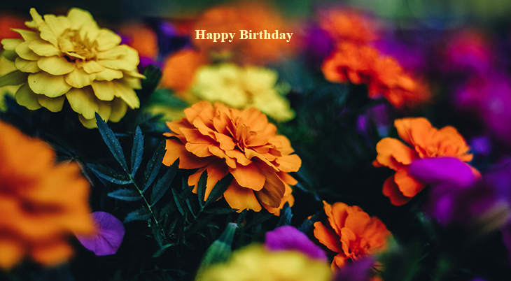 happy birthday wishes, birthday cards, birthday card pictures, famous birthdays, marigolds, orange flowers, yellow annuals
