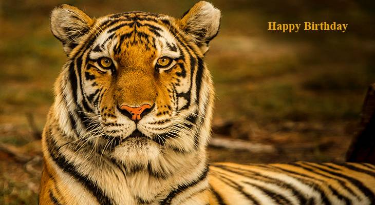 happy birthday wishes, birthday cards, birthday card pictures, famous birthdays, tiger, wild animals, african animals