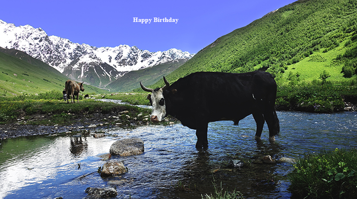 happy birthday wishes, birthday cards, birthday card pictures, famous birthdays, nature scenery, farm animals, cows, switzerland