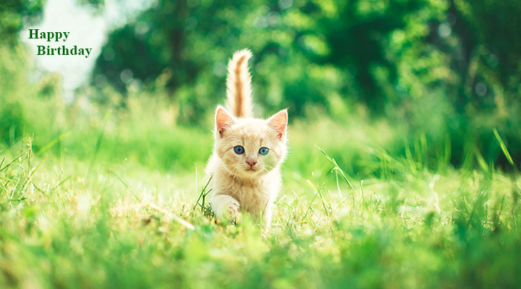 happy birthday wishes, birthday cards, birthday card pictures, famous birthdays, orange kitten, baby animals, cat