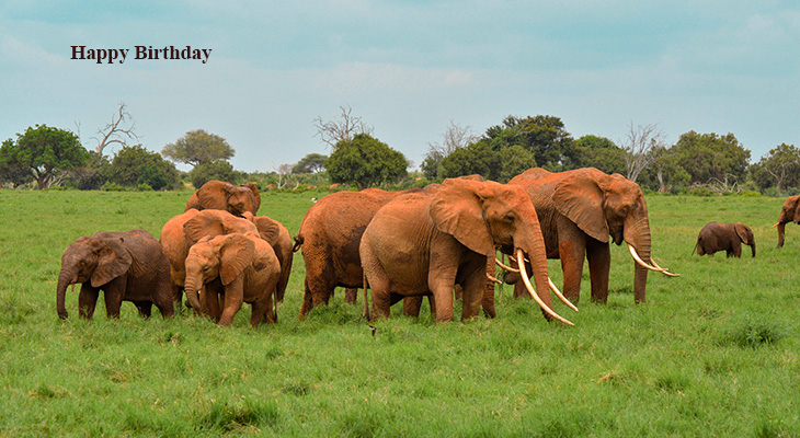 happy birthday wishes, birthday cards, birthday card pictures, famous birthdays, african elephants, elephant herd, kenya, tsavo east national park