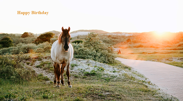 happy birthday wishes, birthday cards, birthday card pictures, famous birthdays, white horse, wild horses, sunset