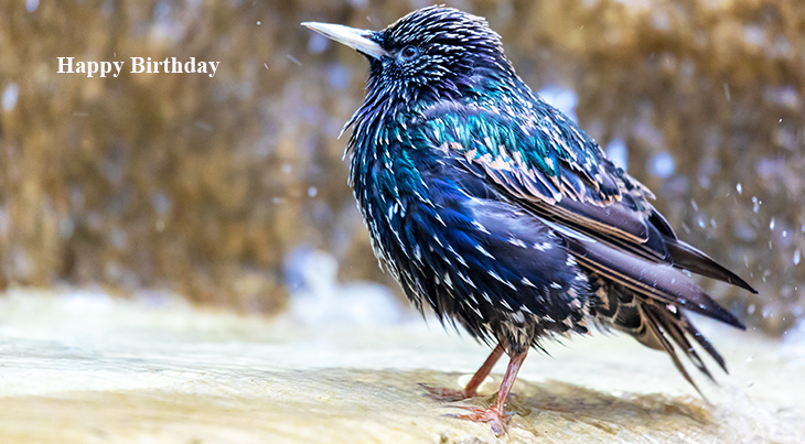 happy birthday wishes, birthday cards, birthday card pictures, famous birthdays, bluebird, wild birds