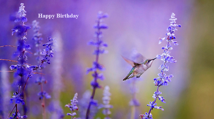 happy birthday wishes, birthday cards, birthday card pictures, famous birthdays, hummingbird, wild birds, purple flowers, lavender