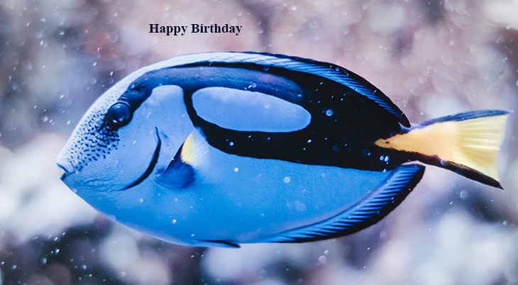 happy birthday wishes, birthday cards, birthday card pictures, famous birthdays, blue fish, tropical fishes