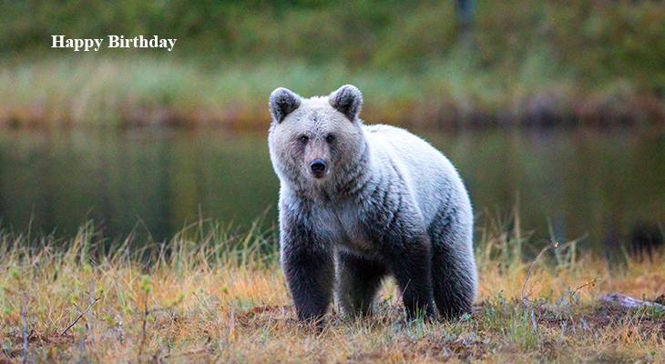 happy birthday wishes, birthday cards, birthday card pictures, famous birthdays, grizzly bear, black bear, wild animals, silver back bear