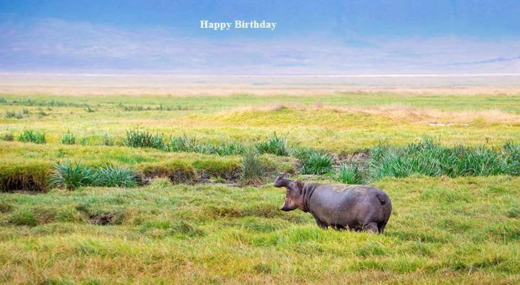 happy birthday wishes, birthday cards, birthday card pictures, famous birthdays, hippos, hippopotamus, wild animals, tanzania scenery, african animals