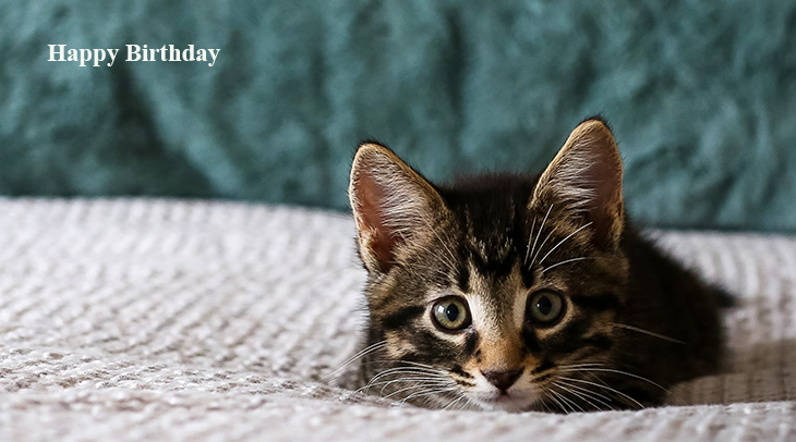 happy birthday wishes, birthday cards, birthday card pictures, famous birthdays, cat, kitten, baby animals,