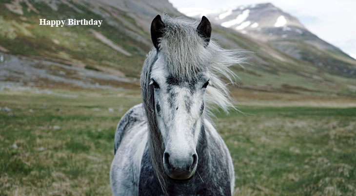 happy birthday wishes, birthday cards, birthday card pictures, famous birthdays, gray horse, animals, nature scenery