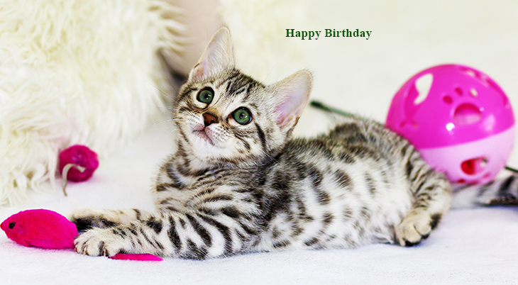 happy birthday wishes, birthday cards, birthday card pictures, famous birthdays, kittens, baby animals, cat