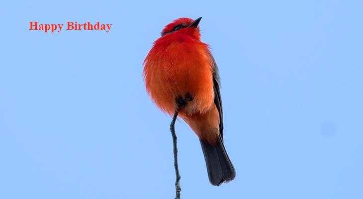happy birthday wishes, birthday cards, birthday card pictures, famous birthdays, red bird, cardinal, wild birds
