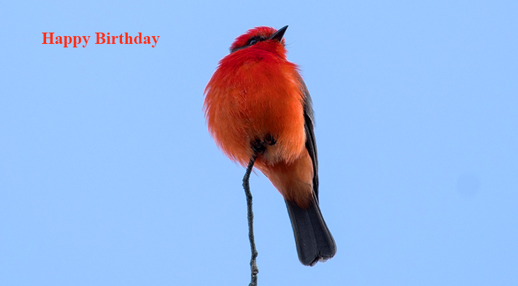 happy birthday wishes, birthday cards, birthday card pictures, famous birthdays, red bird, cardinal, wild birds