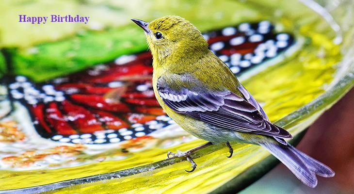 happy birthday wishes, birthday cards, birthday card pictures, famous birthdays, yellow bird, birdbath, wild birds