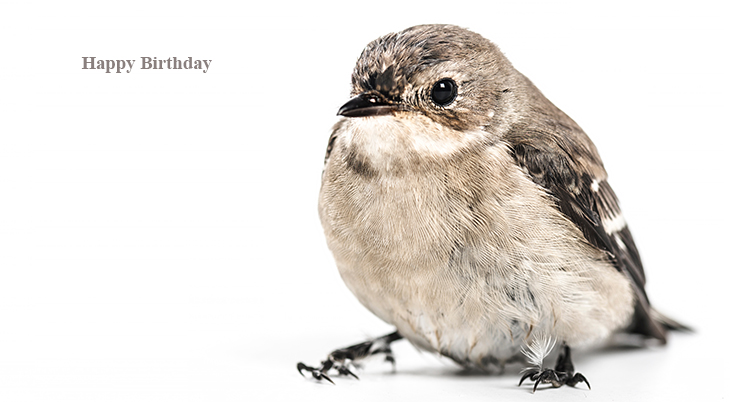 happy birthday wishes, birthday cards, birthday card pictures, famous birthdays, wild birds, nuthatch, sparrow
