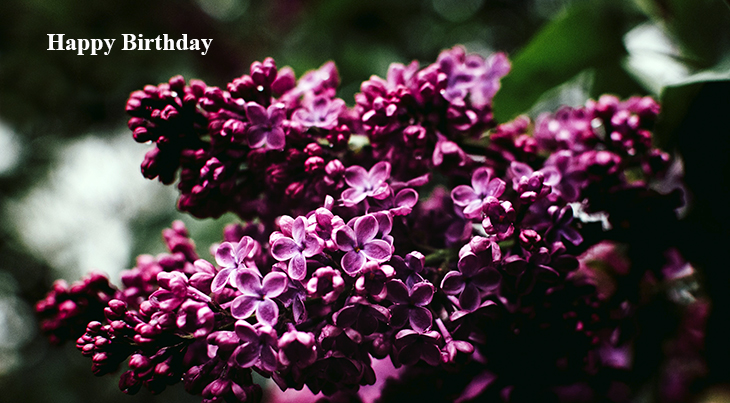 happy birthday wishes, birthday cards, birthday card pictures, famous birthdays, purple flowers, lilacs, spring flower