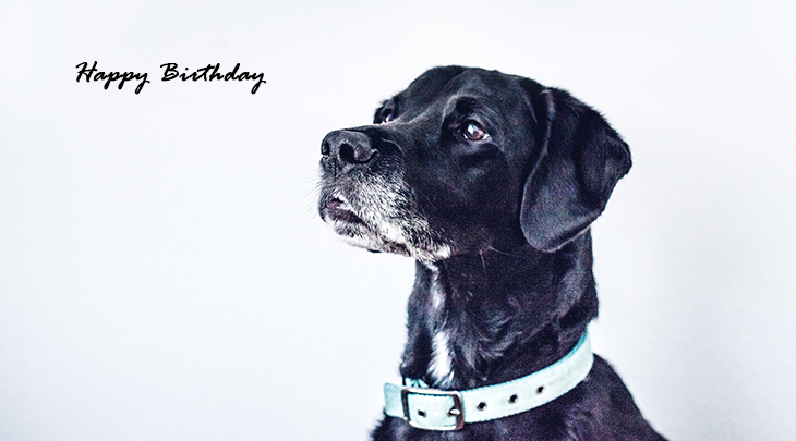 happy birthday wishes, birthday cards, birthday card pictures, famous birthdays, black dog, animals, labrador retriever