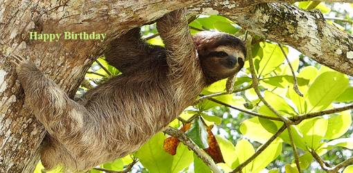 happy birthday wishes, birthday cards, birthday card pictures, famous birthdays, giant sloth, wild animals, costa rica animals