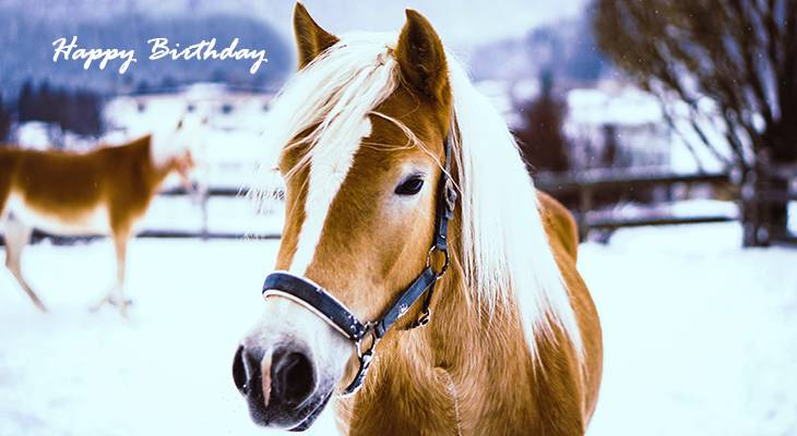 happy birthday wishes, birthday cards, birthday card pictures, famous birthdays, palomino horse, winter, snow