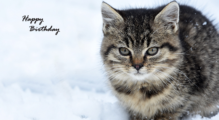 happy birthday wishes, birthday cards, birthday card pictures, famous birthdays, cat, kitten, baby animals, winter