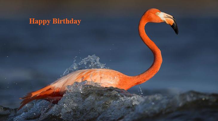 happy birthday wishes, birthday cards, birthday card pictures, famous birthdays, pink birds, flamingo, wild bird,