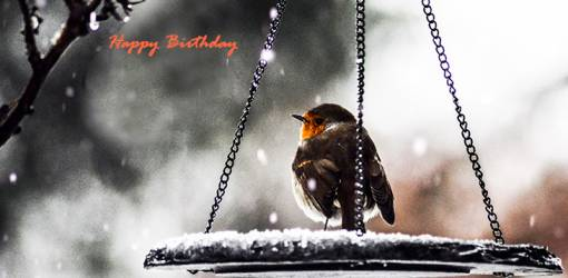 happy birthday wishes, birthday cards, birthday card pictures, famous birthdays, wild birds, winter, snow,